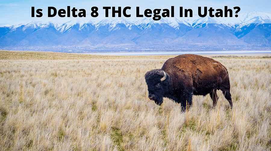 Is Delta 8 legal in Utah - Truly Hemp